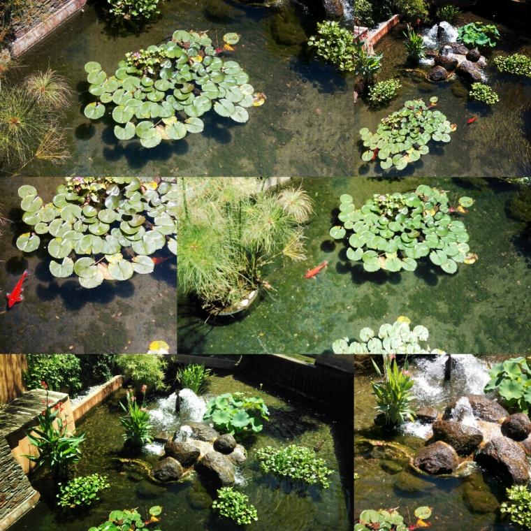 collage_pièce_d_eau