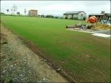 Première pousse d'un nouvelle pelouse