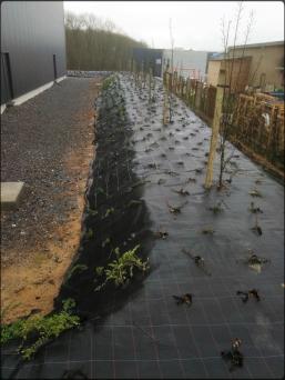 Création d'un parterre de plantes et d'arbustes pour une sociétée